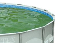 Groen zwemwater met glibberige wanden en bodem